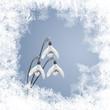 Schneeglöckchen, Schnee und Eiskristalle