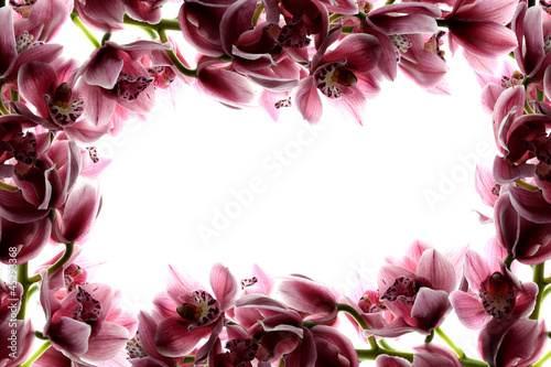 Frame with orchids (white background)