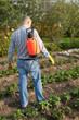 Man spraying strawberry plant