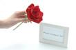 赤い薔薇でプロポーズ