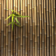 Fototapeten,bambus,asien,meditation,meditieren