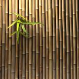Fototapety Bambuswand