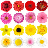 Fototapety Big Selection of Various Flowers Isolated on White