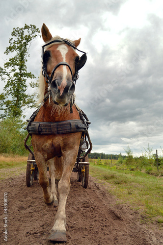 a Horse in trot pulling a Carriage coming toward camera