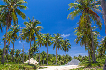 coconut tree on island