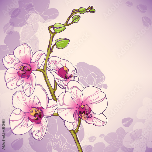 Vector branch of orchids