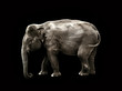 elephant black background