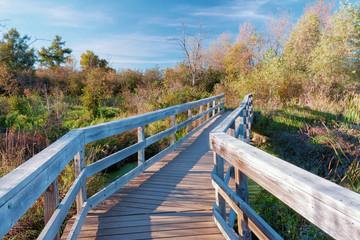 Bridge Over the Marsh
