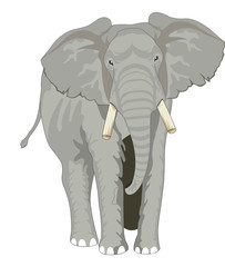 Elephant, illustration