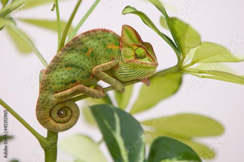 Fototapeten,amphibians,tier,baby,hintergrund