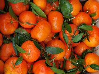 Mandarini di stagione