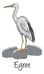 Egret, Color Illustration