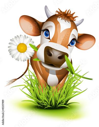 Fotobehang Boerderij Jersey cow in grass