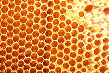 yellow beautiful honeycomb with honey, background