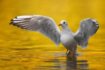 Seagull conductor
