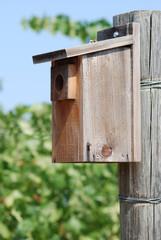 Bird house in vineyard