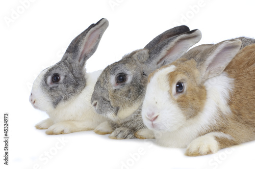 Cute three rabbits