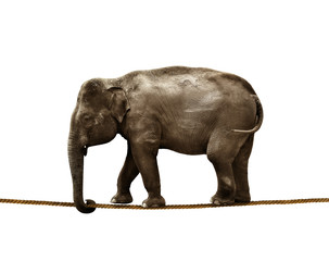 elephant tightrope