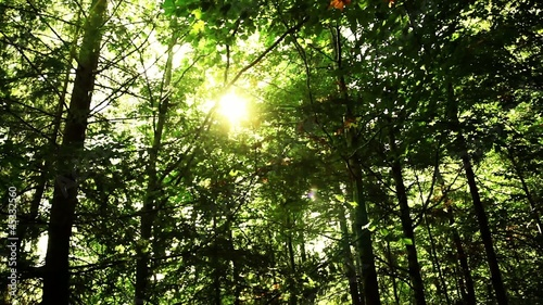 Sun in the forest and a real lens flare