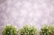Green bushes in purple room
