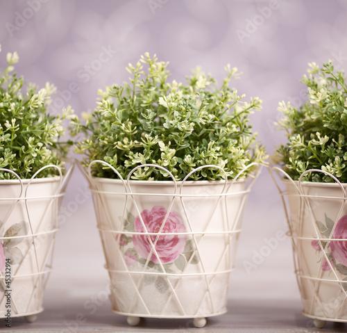 Three plants in ornamented flowerpots