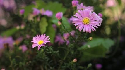 Пчела, цветок (bee, flower)