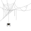 Vector Illustration of a Spider and a Web - 45338938