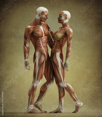 anatomy couple