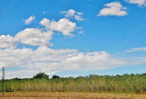 campaign,sky,clouds,trees