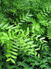 Green foliage of trees in the wood