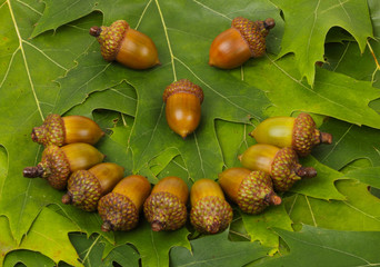 laughing face - acorns and oak leaves