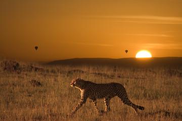 Ghepardo a caccia nel Serengeti Africa