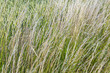grass field in detail