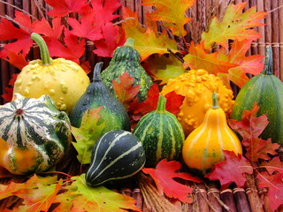 Autumn cornucopia of gourds, leaves, pumpkins, and reeds