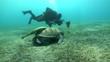 Unterwasserwelt: Meeresschildkröte, Rotes Meer
