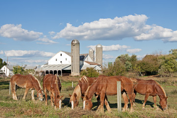 Lancaster County Amish Farm