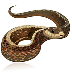 Beautiful realistic brown snake