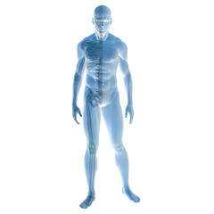 High resolution 3D human ideal for anatomy,medicine and health