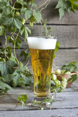 Glass of beer with hop on wooden boards