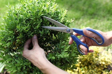 cutting the bush
