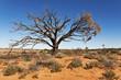 wild landscape in the australian outback