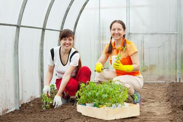 women planting tomato seedling