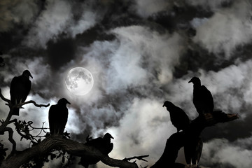 Vultures silhouetted against a full moon and spooky sky
