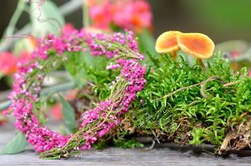 Calluna Vulgaris Dekoration mit Moos und Pilzen