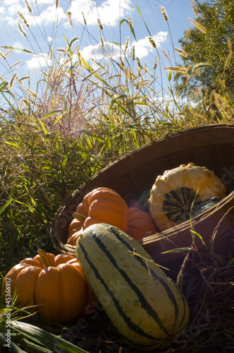 Basket full of fall gourds