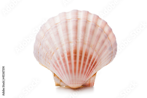 Leinwandbild Motiv scallops shell