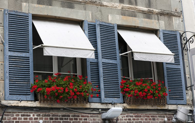 france window with flowers