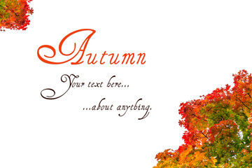 Autumn greeting card on colorful background