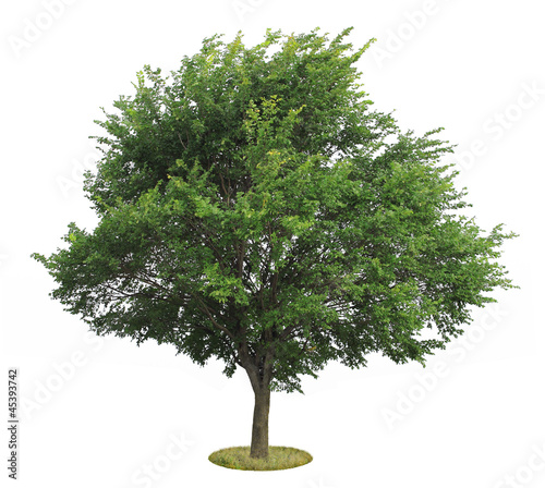 elm, isolated
