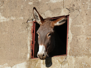donkey and window